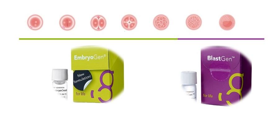 embryogen-zarodki