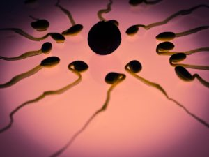 sperm-956482_960_720