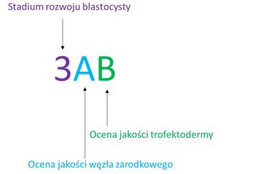 schemat8